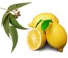 Лимонно Эвкалиптовая чистка кишечника. Отзывы прошедших очищение